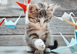 cute kitten playing with paper cranes