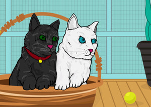 Black and white cats sitting in the basket