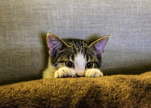 5 Reasons Why Kittens Cry and What To Do