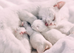How To Tell If Your Kitten's Sleeping Pattern Is Normal