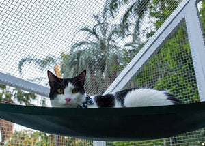 cat with cat hammock in paws playhouse cat run