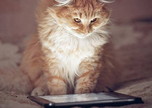 cat watching cute cat videos