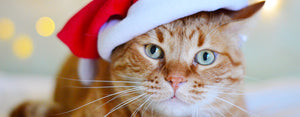 cat wearing santa hat christmas