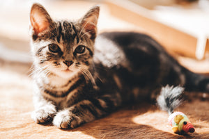 What can I do if my kitten is scratching the furniture?