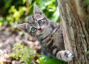 How To Make a Cat-Friendly Garden Around Your Cat Enclosure