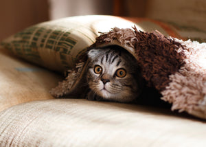 A Guide to Rhinitis and Sinusitis in Kittens