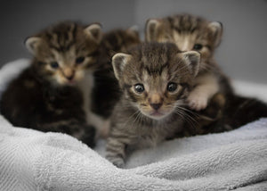 How to Care for Foster Kittens