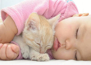 Affectionate Cat With Baby