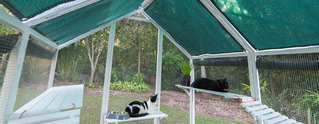keeping cats cool in outdoor cat enclosure - shade