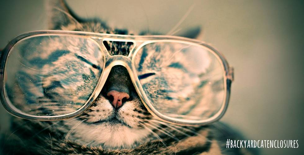 smart cat in glasses
