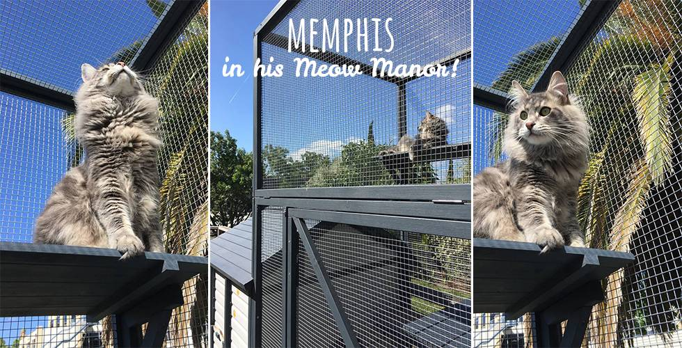 cat in vertical cat run of meow manor cat enclosure