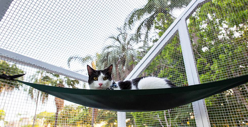 cat safe in a cat run outdoors
