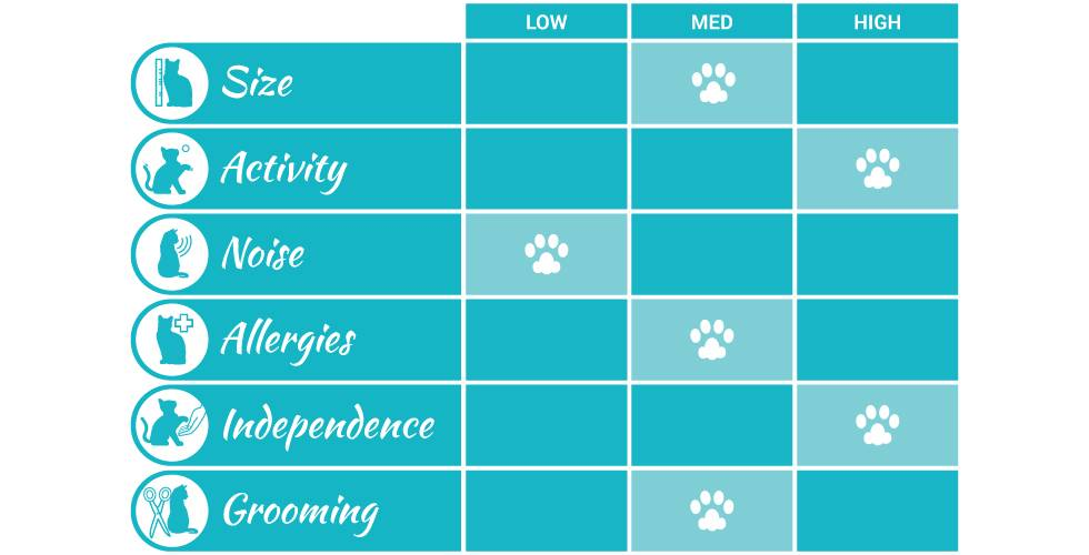 egyptian mau cat breed profile infographic