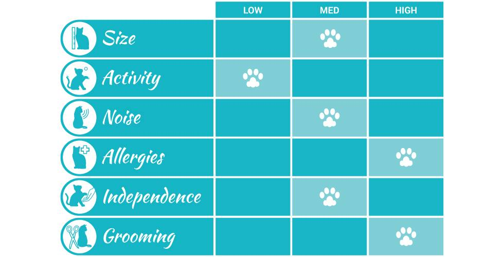 persian cat breed profile infographic