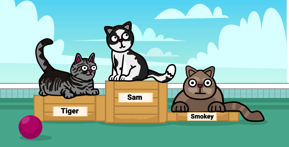Popular names for cats