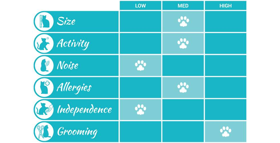 scottish fold cat breed profile infographic
