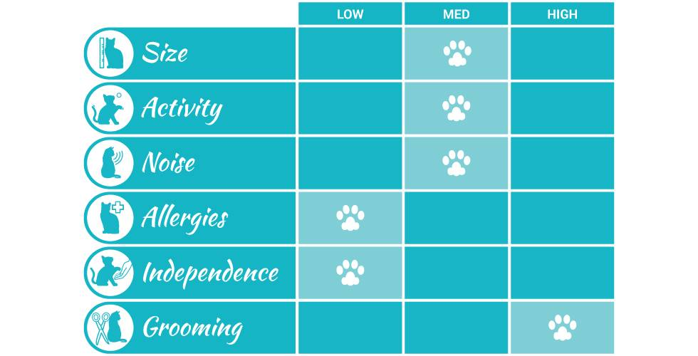 sphynx cat breed profile infographic