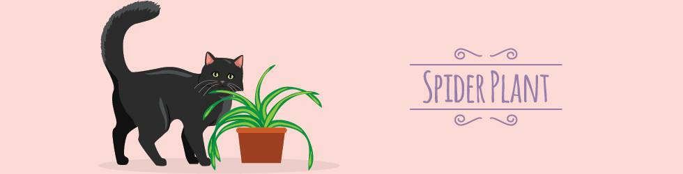 plants that cats love - spiderplant