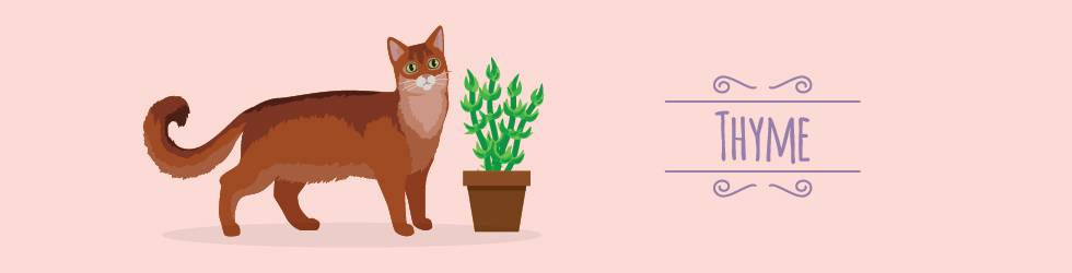 plants that cats love - thyme