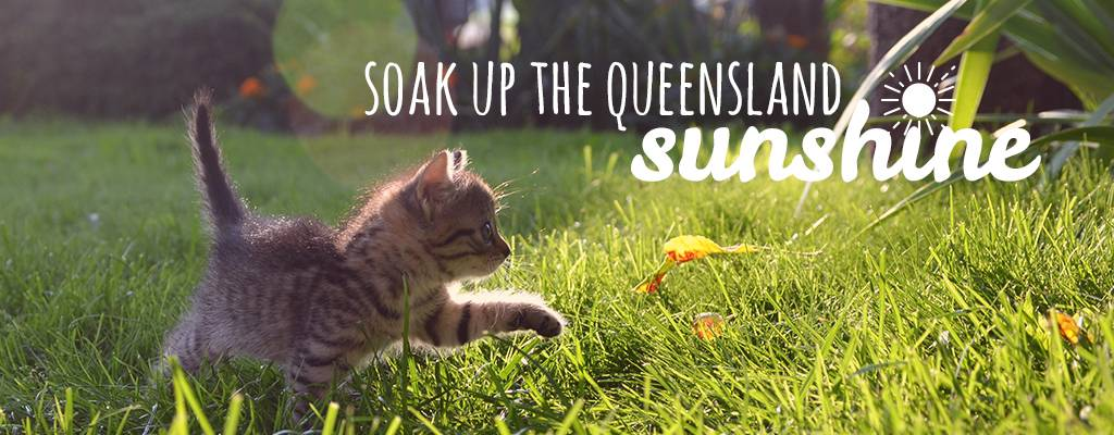 brisbane cat enclosures - soak up the queensland sun