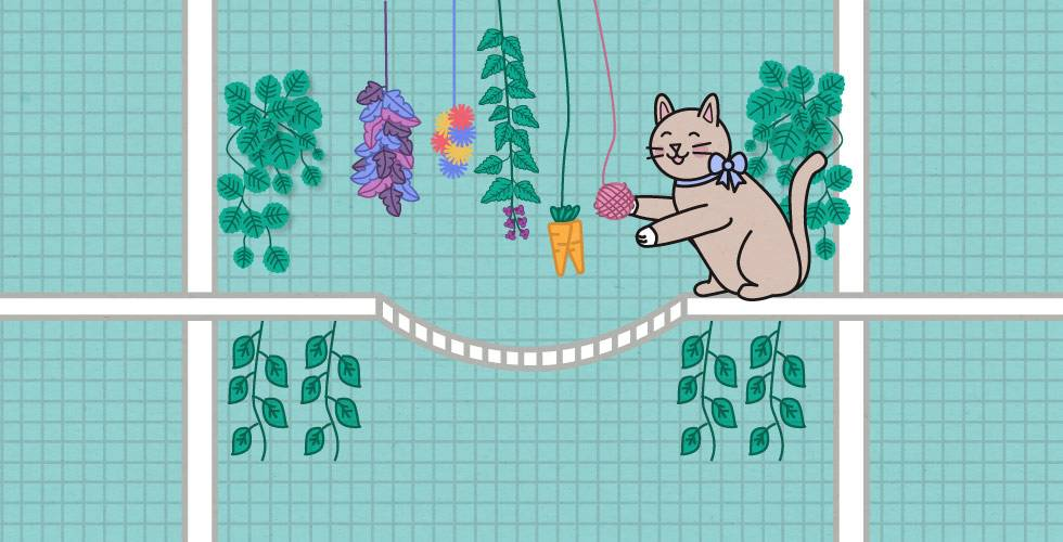 cat with hanging cat toys in cat run