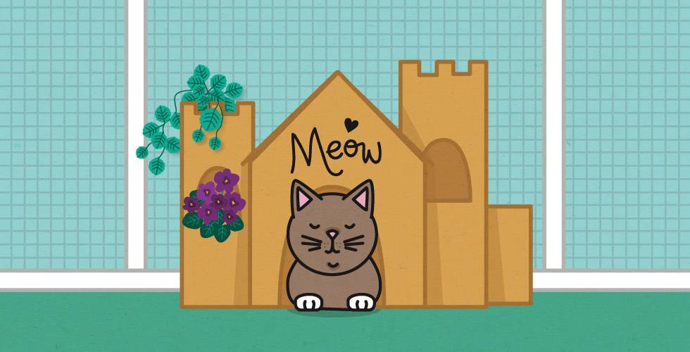 cat with cardboard castle in cat run