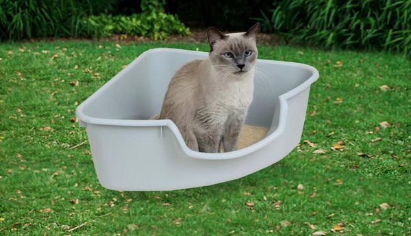 cat in white corner litter box
