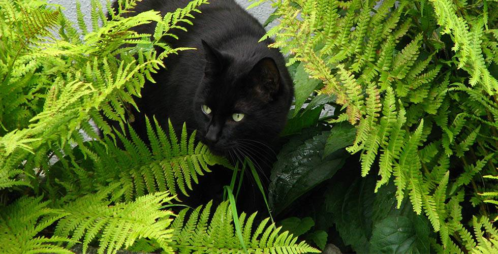 cat with ferns