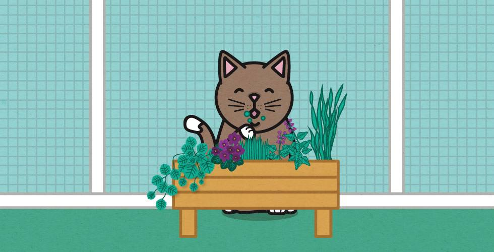 cat in cat run with garden