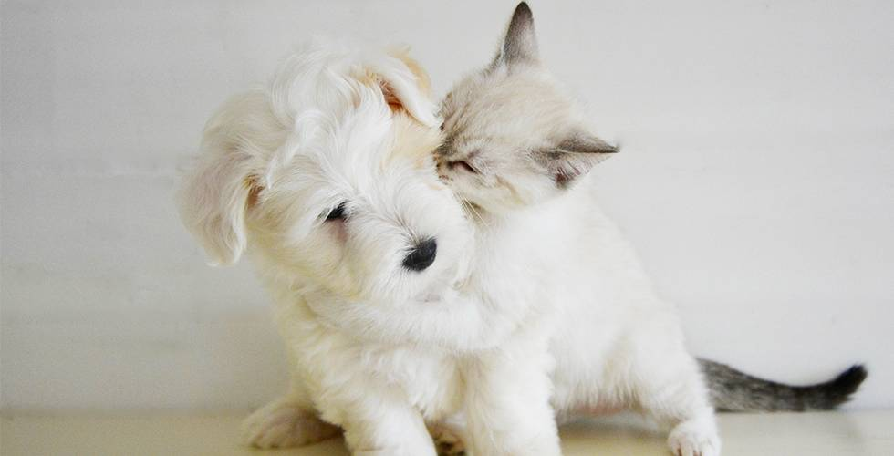 cat playing with puppy dog fur sibling