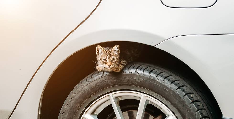 cat sitting on car tyre