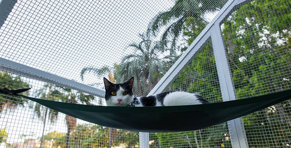 a cat enclosure or run will keep your cat entertained