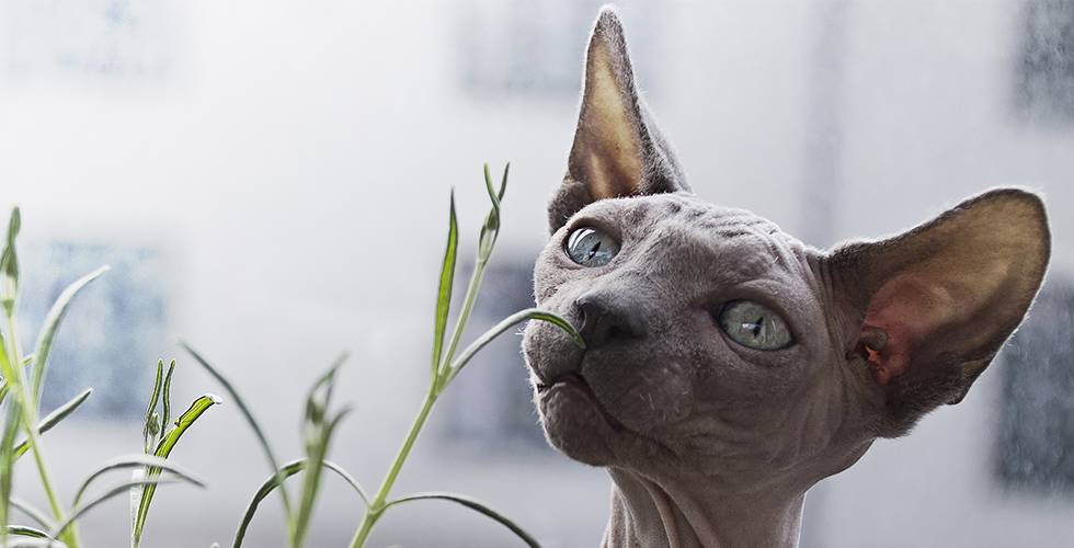 a cat garden will keep your cat entertained