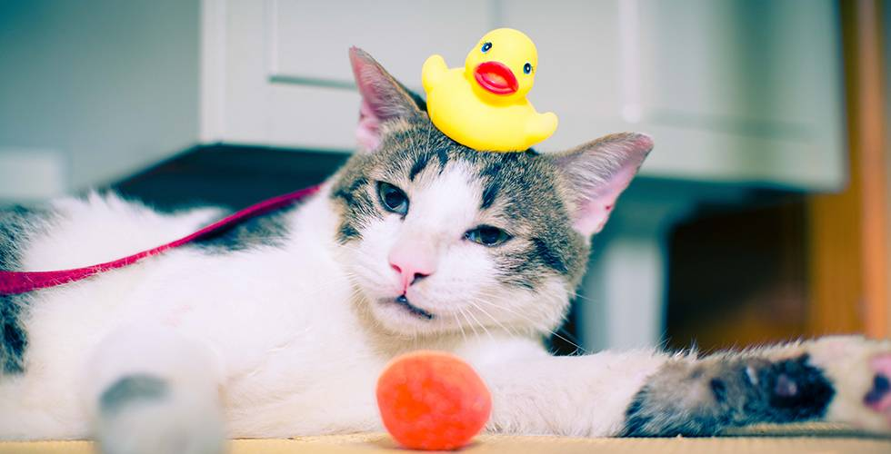 cat toys will keep your cat entertained