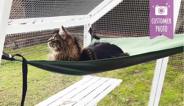 cat in hammock inside paws playhouse enclosure