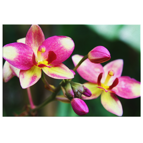 Flora Fauna - Orchid #1