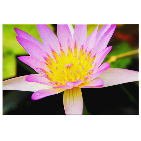 Flora Fauna - Water Lily #1