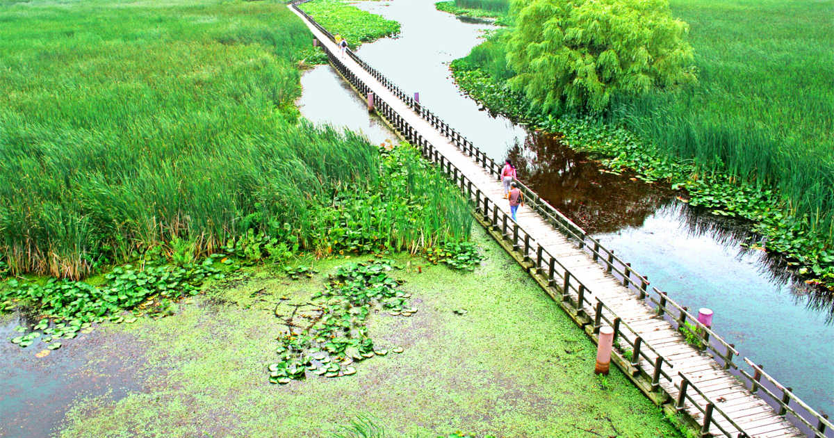 A 1km Floating Boardwalk Is The Perfect Spring Hike In Ontario