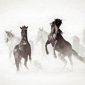 Photograph of a group of horses running as a group and kicking up a lot of dust. All the horses seem to be moving in the same direction, except for one whos on its hind legs and looking back in the direction they are coming from.