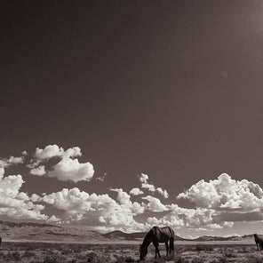 Black and white photo of horses grazing in the desert.