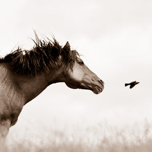 Photo of a horse looking at a bird in flight.