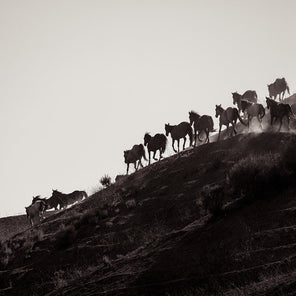 Black and white image of a group of horse running on the side of a rocky hill.