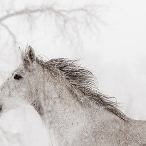 A white horse in light snow fall. The horse is shown in profile. There are some out of focused tree branches in the background but beyond that the background is bright white.