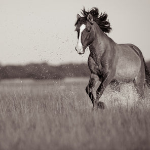 A photo of a horse galloping though tall grass. The horse is kicking up particles of earth, giving it the illusion of splashing water.