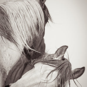 Vertical Black and white image of two horse. The horse the closest to the viewer is looking away back into the composition. The other horse is angled towards the viewer.