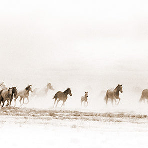 A long horizontal, image of a herd of horses galloping through a desert like environment.