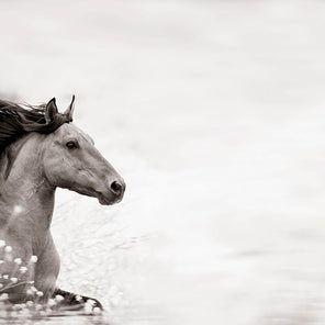 A black and white image of a horse running into the composition from the left side of the image.