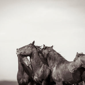 Black and white image of four horse. The four horse are grouped together at the bottom right of the image.
