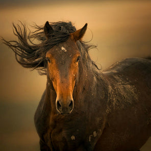 A photograph of a horse. The horse is staring directly at the viewer and its mane is blowing in the wind.