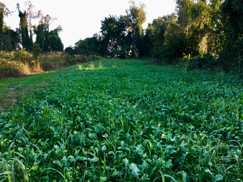 Field of Greens Blend - Food Plot Seed